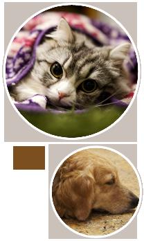 動物 画像